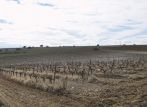 Cepas Bodega y Viñedos Agejas