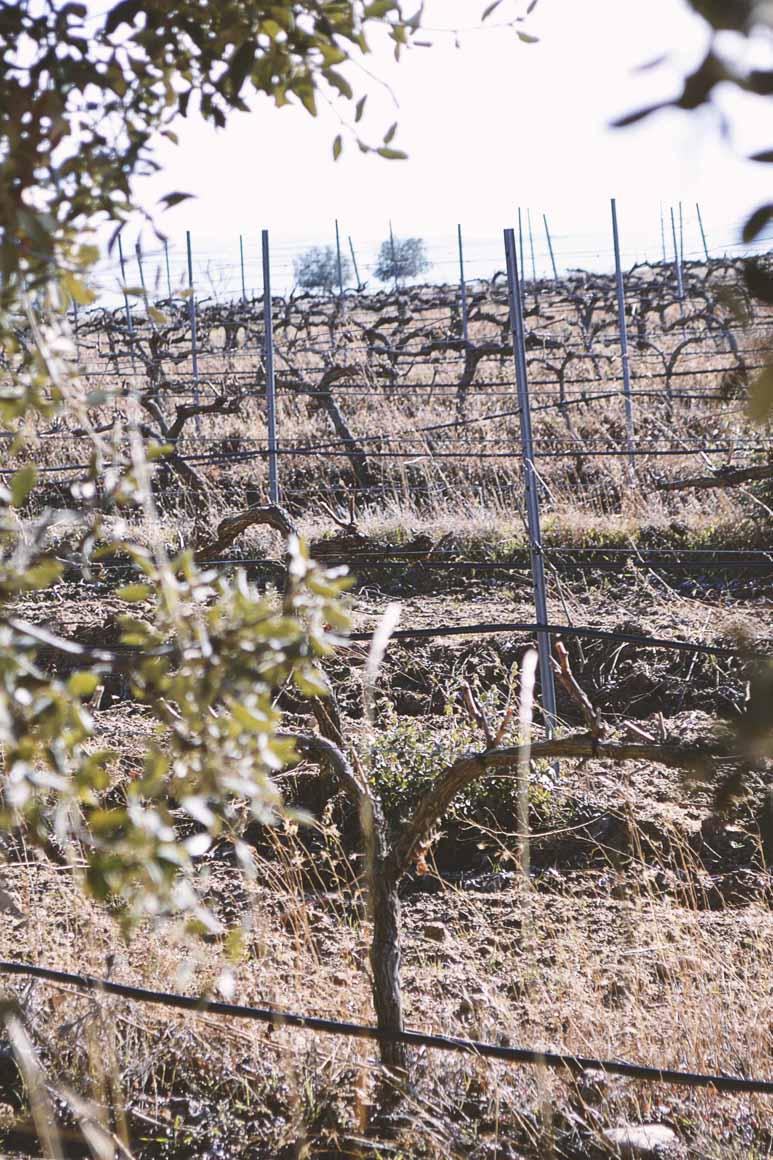 nuestras viñas, de Bodega y viñedos agejas en detalle